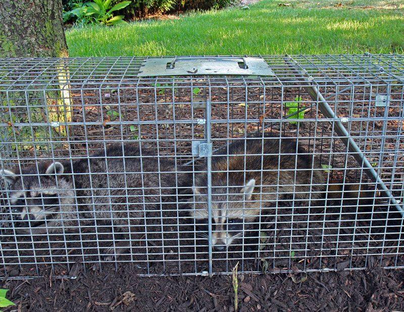 Control de Animales en Costa Rica
